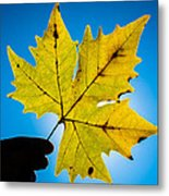 Autumn Maple Leaf In The Sun Metal Print