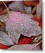 Autumn Melange Metal Print