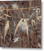 Autumn Milkweed Metal Print
