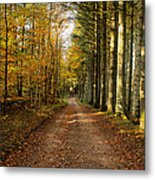 Autumn Mood In The Forrest Metal Print