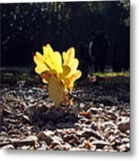 Autumn Oak Metal Print