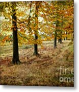 Autumn On Cannock Chase Metal Print