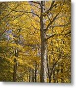 Autumn Orange Forest Colors At Hager Park No.1189 Metal Print