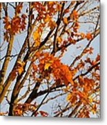 Autumn Orange Metal Print by Guy Ricketts