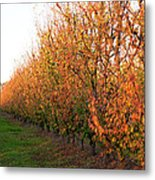 Autumn Orchard Metal Print