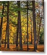 Autumn Pines Square Metal Print