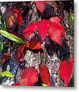 Autumn Poison Ivy Metal Print