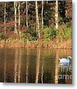 Autumn Pond Sunset With Swan Metal Print