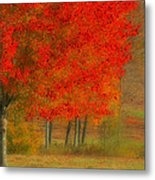 Autumn Popping Metal Print