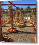 Autumn Pumpkin Patch Metal Print by Joann Vitali