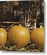 Autumn Pumpkins Metal Print by Amanda Elwell