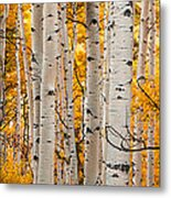 Autumn Quaking Aspen Panoramic Metal Print