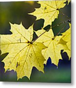 Autumn Rain Metal Print