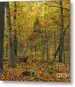 Autumn Red Was Blood Red Metal Print