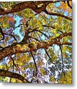 Autumn Revealed Metal Print