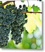 Autumn Ripe Red Wine Grapes Right Before Harvest Metal Print by Ulrich Schade