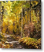 Autumn Road - Tipton Canyon - Casper Mountain - Casper Wyoming Metal Print