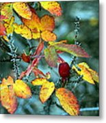 Autumn Rose Metal Print