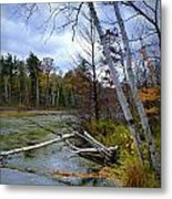 Autumn Scene Of Along The Shore Of The Platte River In Michigan Metal Print