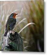 Autumn Scottish Robin Metal Print