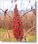 Autumn Seed Pod Metal Print