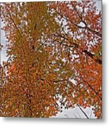 Autumn Sky Through Trees Metal Print