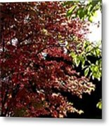 Autumn Snowball Bush Metal Print