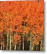 Autumn Splender  Metal Print