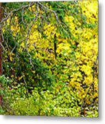 Autumn Splendor 14  Metal Print
