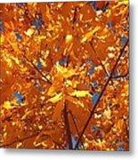 Autumn Splendor 15 Metal Print