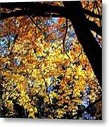Autumn Splendor 3 Metal Print
