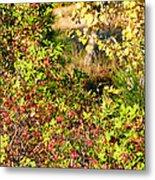 Autumn Splendor 7 Metal Print