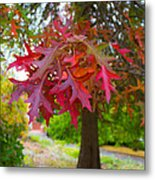 Autumn Splendor Metal Print by Mamie Thornbrue