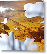 Autumn Star Metal Print