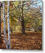 Autumn Stroll  Metal Print by Kimberly Maiden
