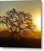 Autumn Sunset Metal Print