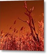 Autumn Surprise  Metal Print by Thomas  MacPherson Jr