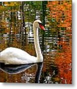 Autumn Swan Metal Print