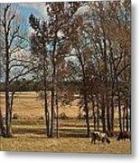 Autumn Texas Pasture Metal Print