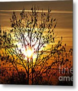 Autumn Tree In The Sunset Metal Print