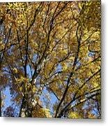 Autumn Tree Metal Print