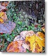 Autumn Tree Trunk  Metal Print