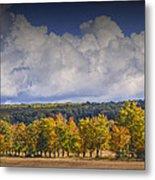 Autumn Trees In A Row Metal Print