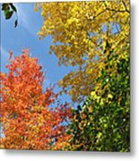 Autumn Treetops Metal Print