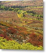 Autumn Tundra With Boreal Forest Metal Print