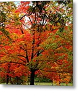 Autumn Umbrella Of Color Metal Print
