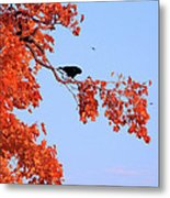 Autumn View Through Red Leaves Metal Print