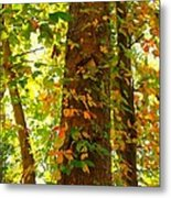 Autumn Vines Metal Print