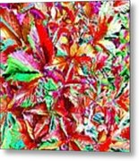 Autumn Virginia Creeper Metal Print