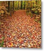 Autumn Walk In Ohio Metal Print